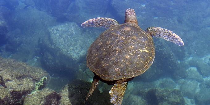Turtle Sanctuaries in Mexico