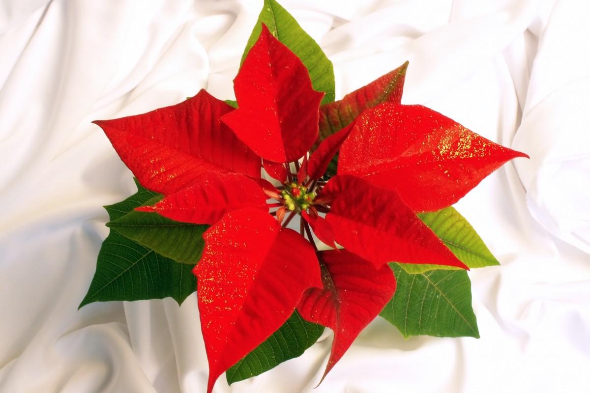 Christmas Poinsettia Decoration