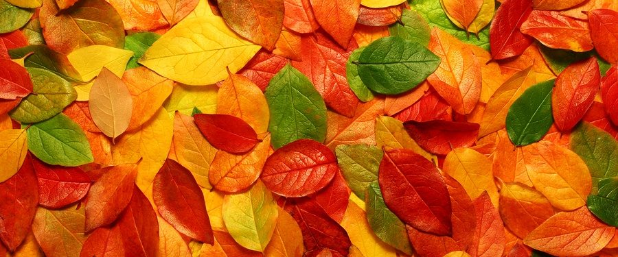 Autumn Climates in Mexico
