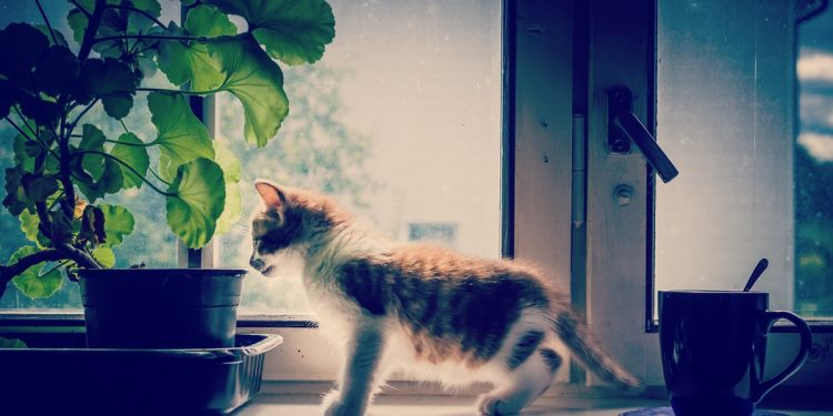Kitten playing at home on windowsill