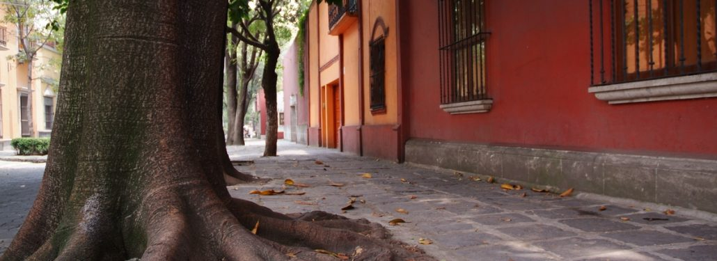 Autumn - Coyoacan Mexico