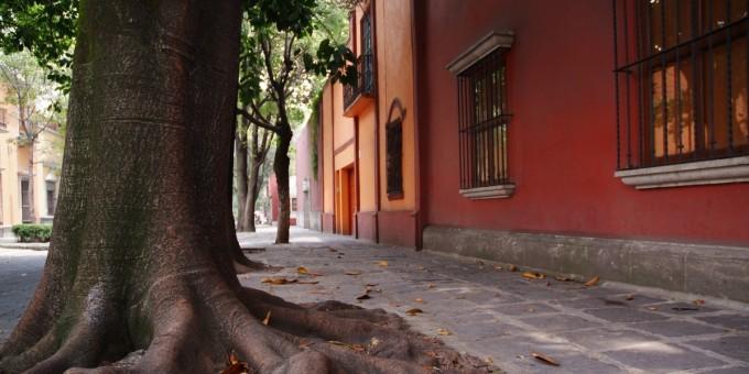 Autumn - Coyoacan Mexico