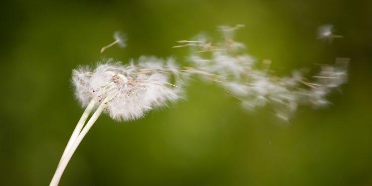 Mystical Wind