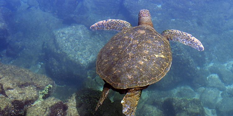 Turtle Sanctuaries in Mexico