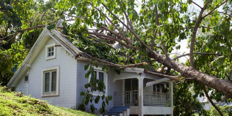 Tree Fallen on a House